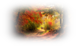 117036022_large_105579199_autumn_in_the_forest_by_valiunicd5j0w6d.png