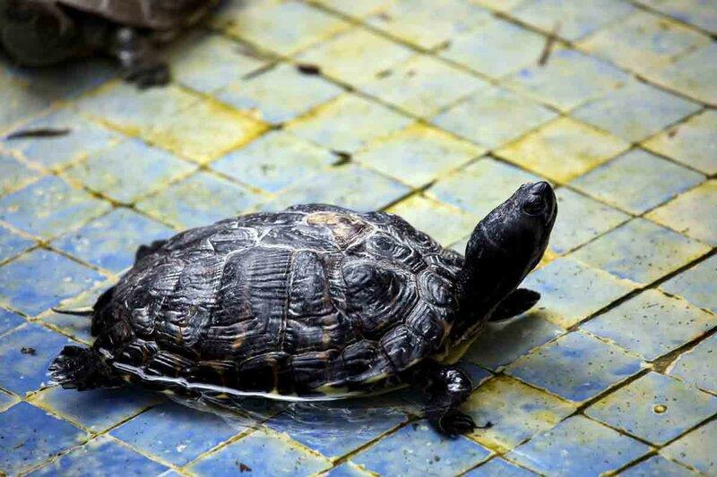 Тарудант - Дворец Паши, черепаха