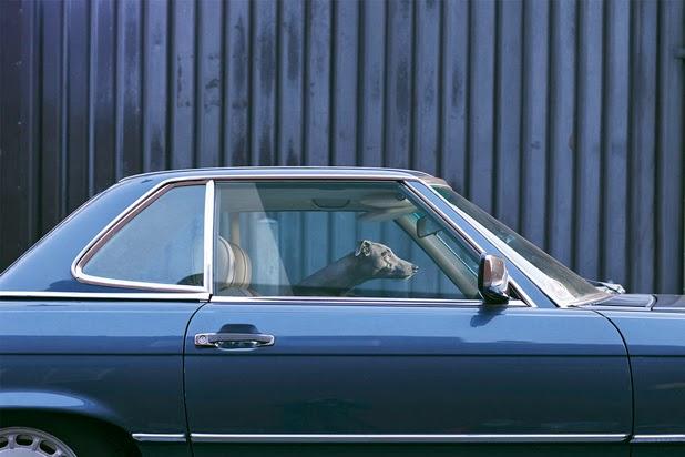 I'll wait in the car, Martin Usborne280.jpg