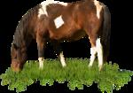 RR_FarmersAlmanac_Element033.png