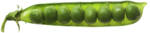 RR_FarmersAlmanac_Element043.png