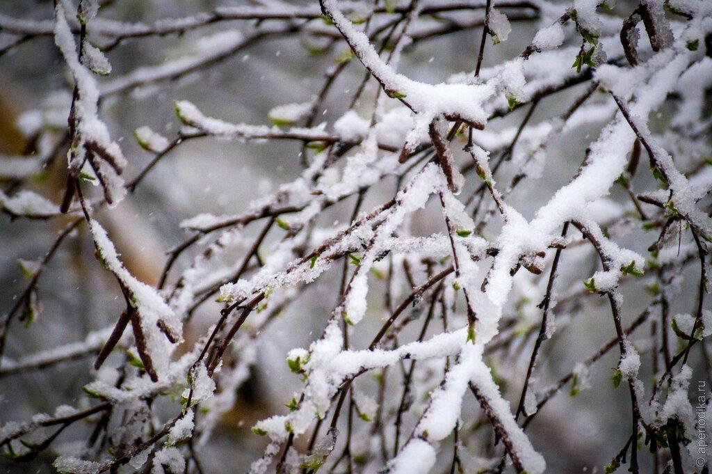 Майский снег в Златоусте