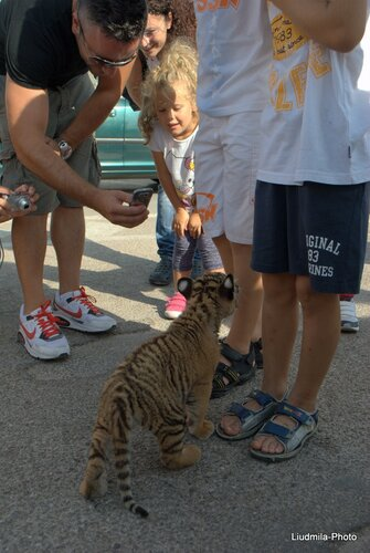 По Улице Водили Тигра. Почти 2 месяцев от роду