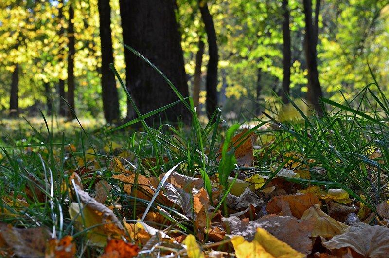 Осеннее па-де-де