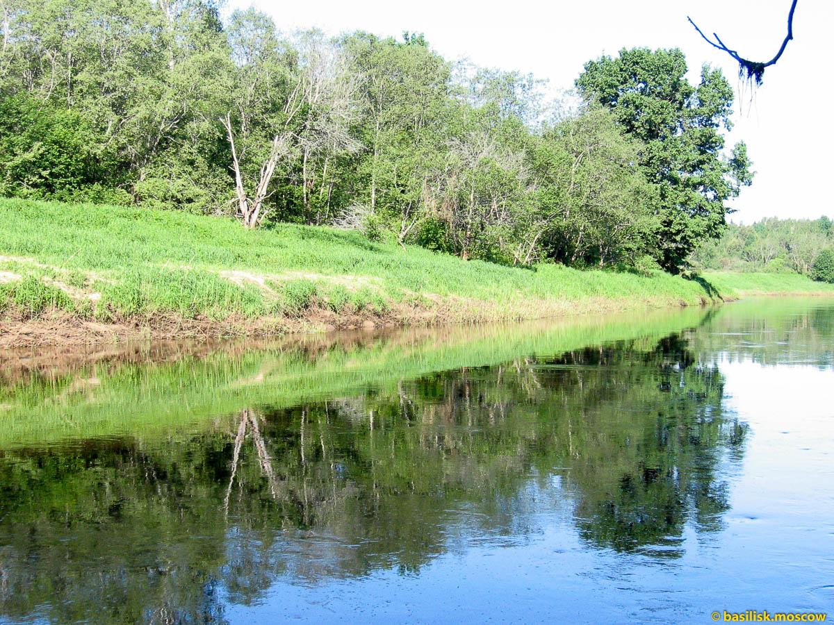 Река Дубна. Июнь 2013.