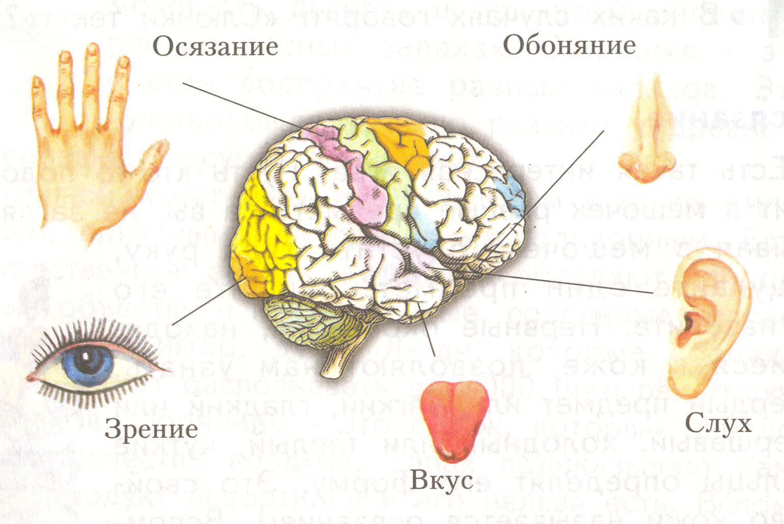 Зазитные системы организма