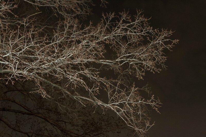 Дерево, Воробьевы горы