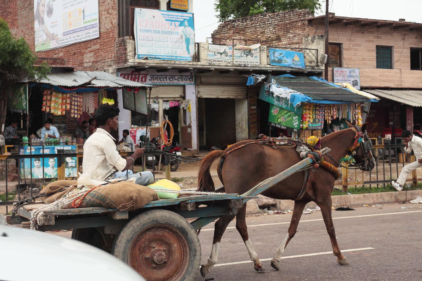 Фотография 2. Путешествие в Агру. Наездник. Отзывы туристов об экскурсиях в Индии.