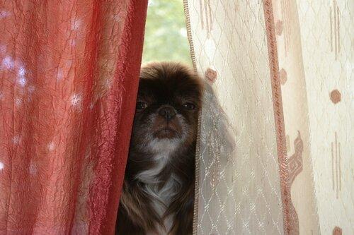 Сара на окне