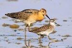 Альбом для сравнения размеров и окраски птиц