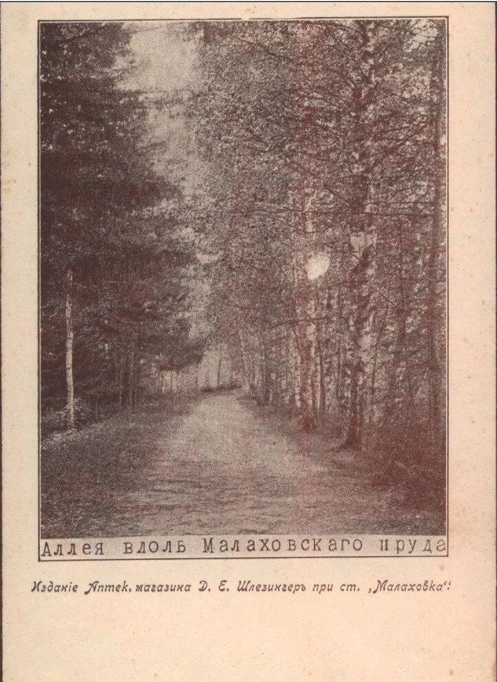 Окрестности Москвы. Аллея вдоль Малаховского пруда