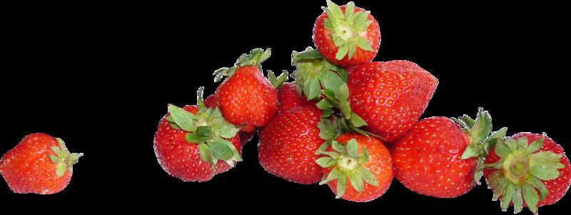 bee_fraisia_el33.png