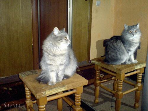А у меня живет кошка... - Страница 3 0_c7518_c439631d_L