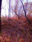 Петропавловская осень