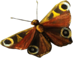 ldavi-paintersfaeries-redmoth1.png