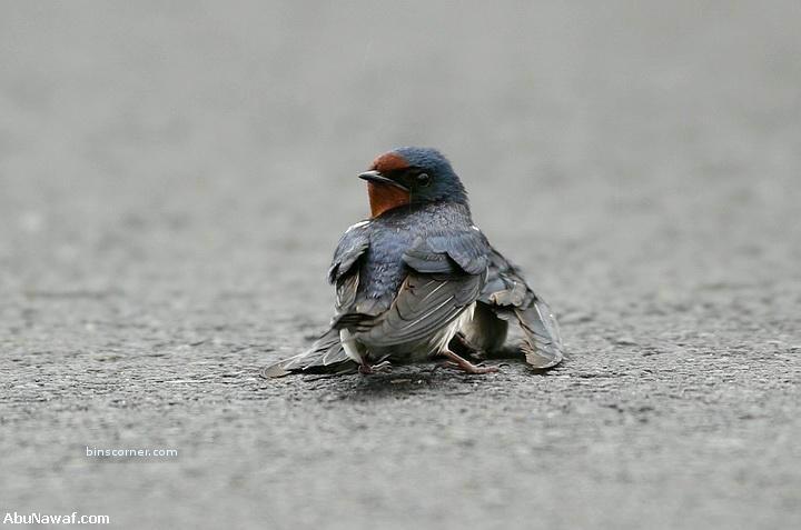 Птицы любят как люди