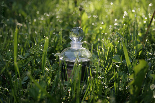 Iris silver mist - Serge Lutens