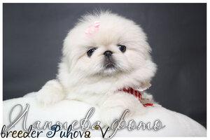 Лаптева-фото - Фотографии животных для питомников и заводчиков - Страница 4 0_125ef0_dd922af8_M
