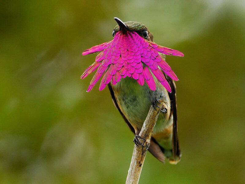 colibri-02.jpg