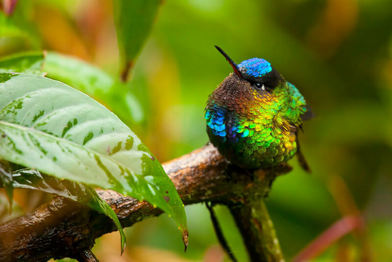 colibri-16.jpg