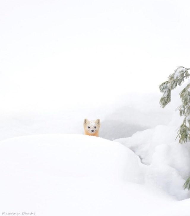 100 самых красивых зимних фотографии: пейзажи, звери и вообще 0 10f5cb 1118e375 orig