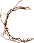 wendyp_autumnflavors_branch.png