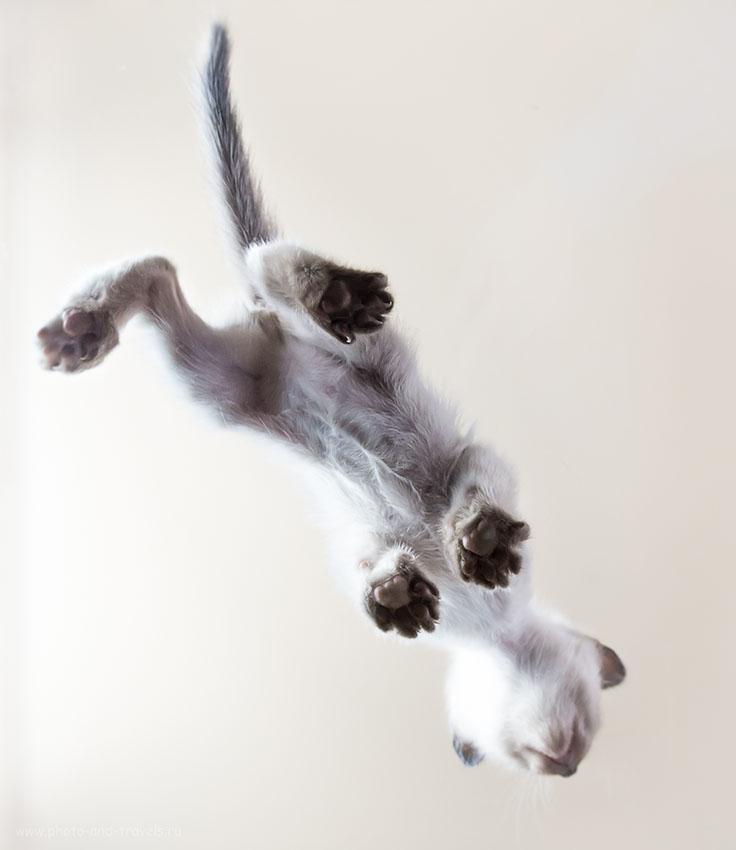 Фотография 11. Портрет котенка с необычного ракурса (фотоаппарат Nikon D610, объектив Samyang 14/2.8, ИСО 800, 14, f/9.0, 1/30)