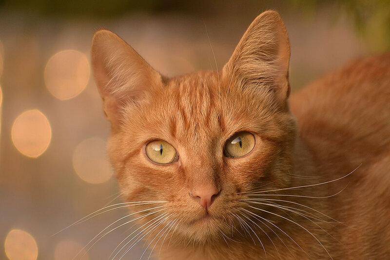 «Ты чья?» - спросил Рыжий кот.