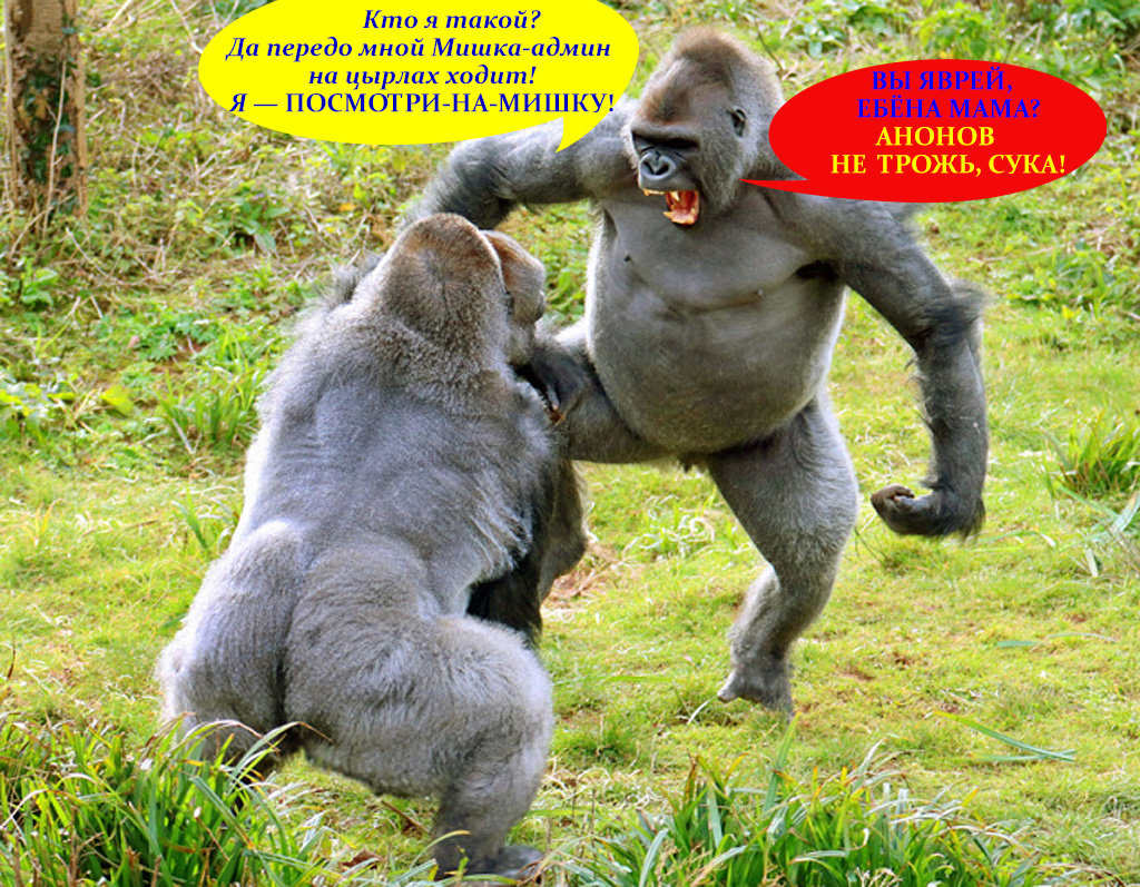 Лукэтмиша горилла