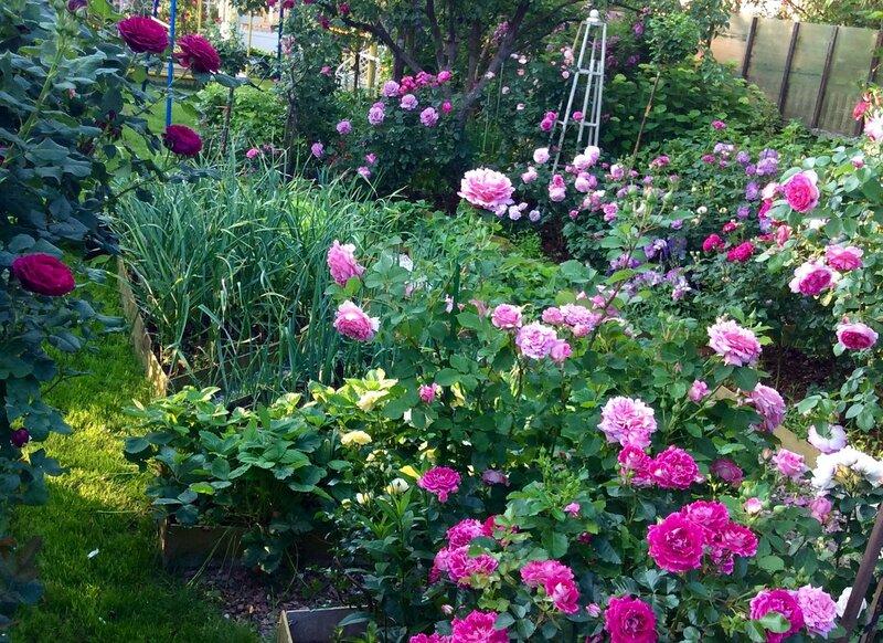 Огородик и Голубая клумба