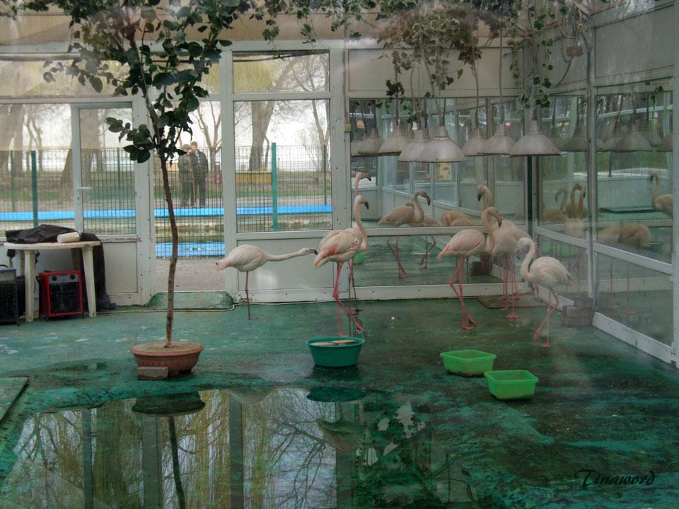 фламинго-6.jpg