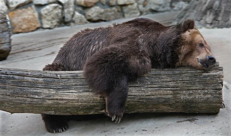...А я лягу-прилягу, утомившись немного, я минутку посплю...