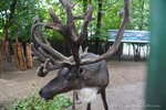 Зоопарк Лимпопо в Нижнем Новгороде
