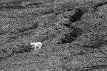 Черно-белый мишка
