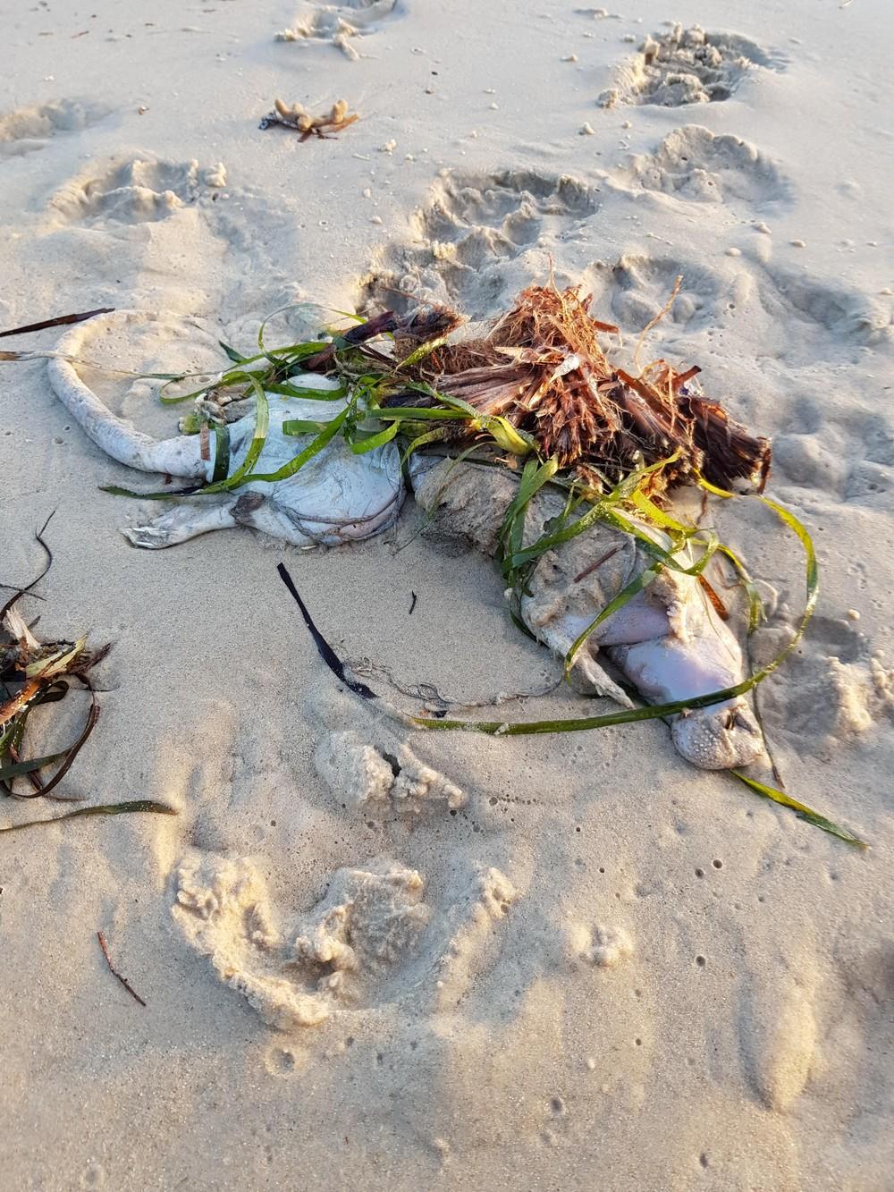 Странное существо нашли собаки на пляже в Австралии