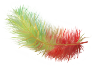перья