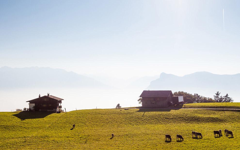 В сельском хозяйстве занято всего около 2% населения.