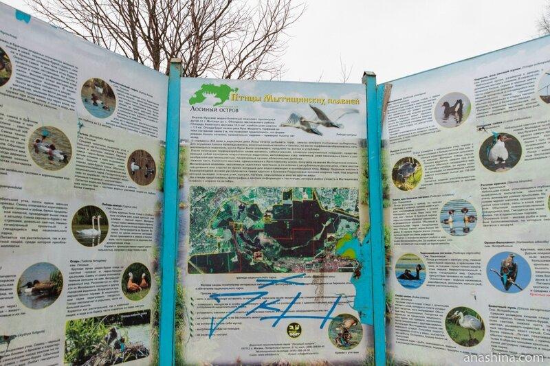 """Информационный щит """"Птицы Мытищинских плавней"""", Лосиный остров"""