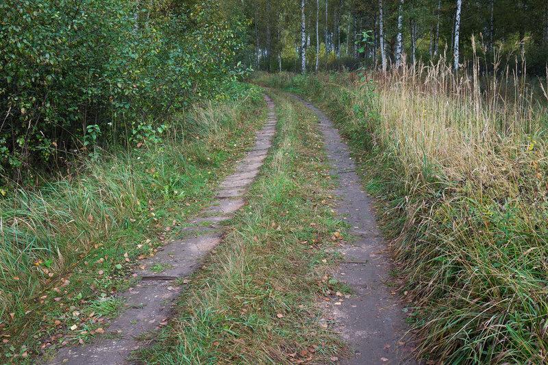дорога по насыпи узкоколейки на тесовских торфоразработках