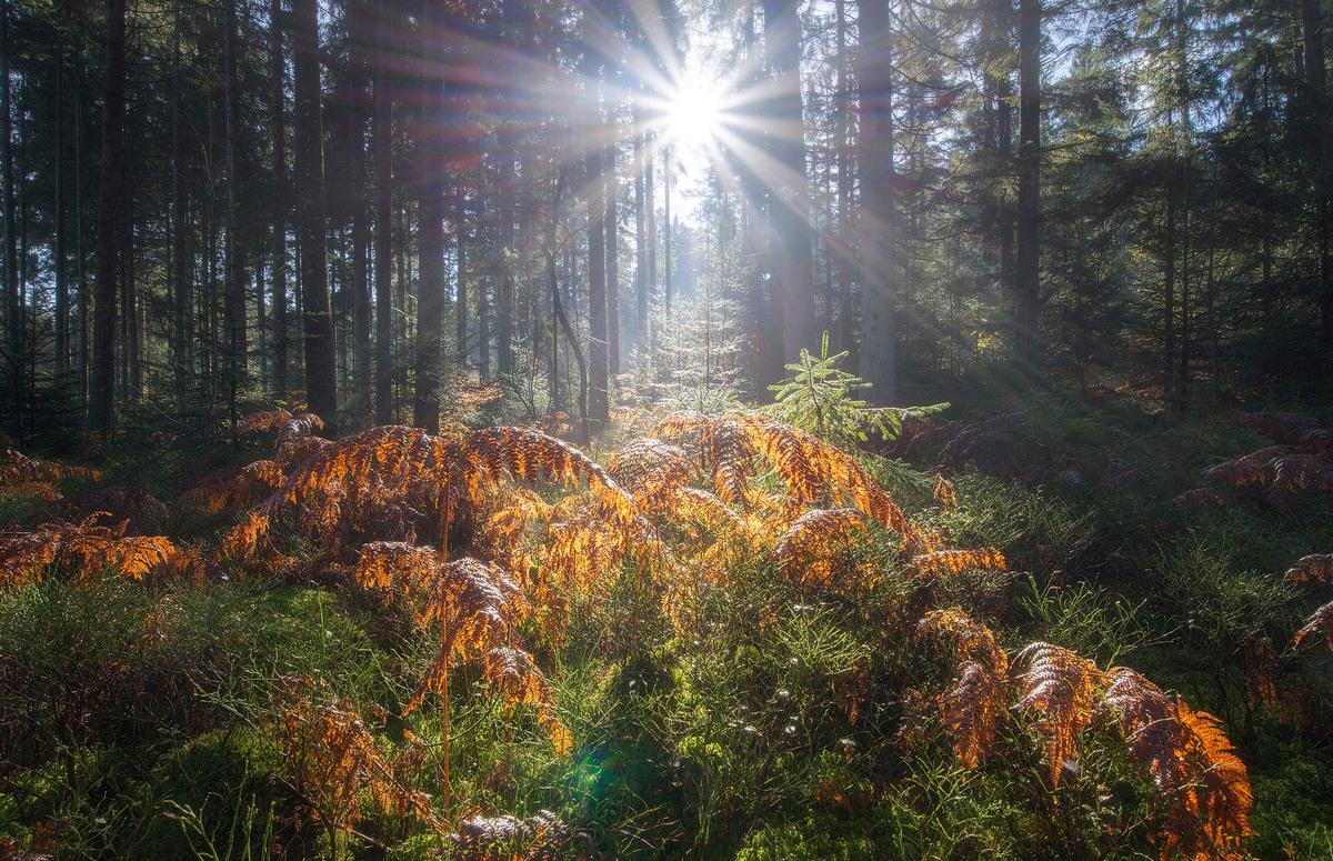 Замечательные пейзажи от Martin Kornmesser