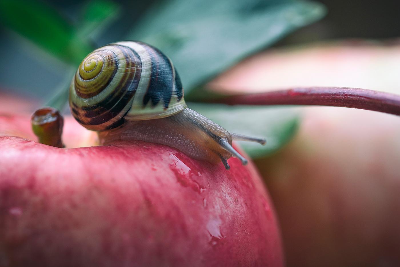 Улитки, грибы,яблоки / фото Lena Sanver