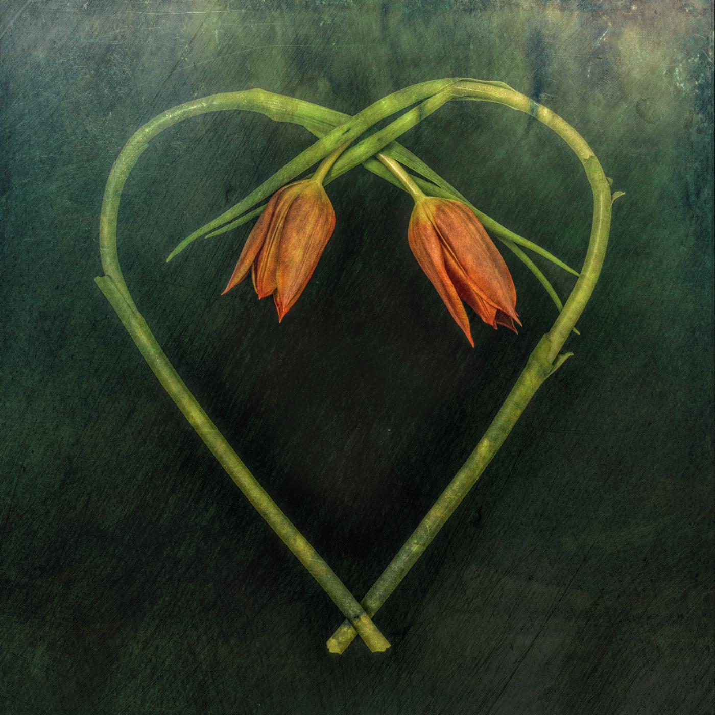 Hearts / фото Bettina Güber