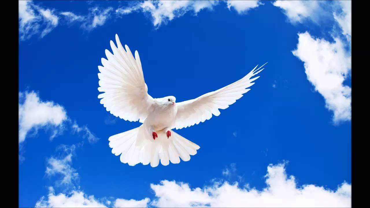21 сентября — Международный день мира. Голубь в полете