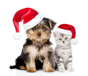 Little kitten and puppy  in red christmas hats sitting together.