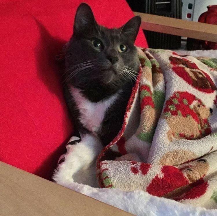0 17daef 595e030e XL - Фотки Новогодних котиков из соцсетей