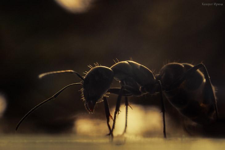 На языке муравья (14 фото)