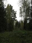 Старая дорога Овсянниково - Ворониха