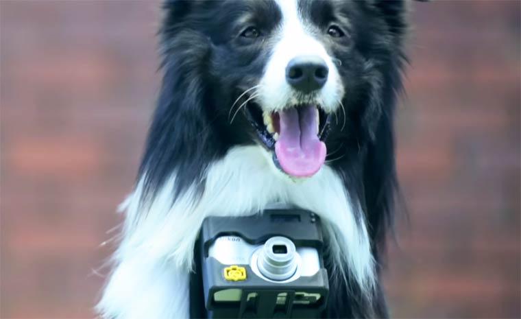 Nikon has designed a camera for your dog