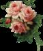Rose-14.png