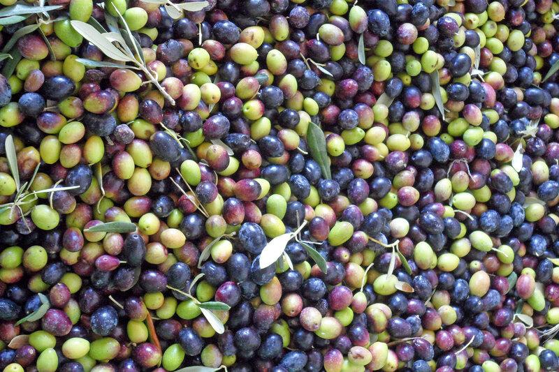 оливки.jpg